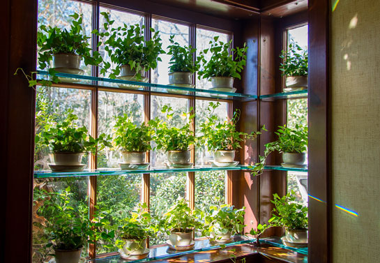 Floating shelves on home windows with plants
